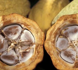 cacao vendita scoperto